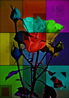 Roses PhotoArt by PLATUX