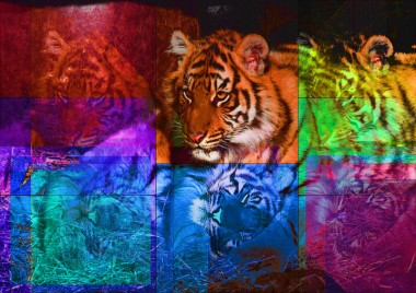 Tiger PhotoArt by PLATUX