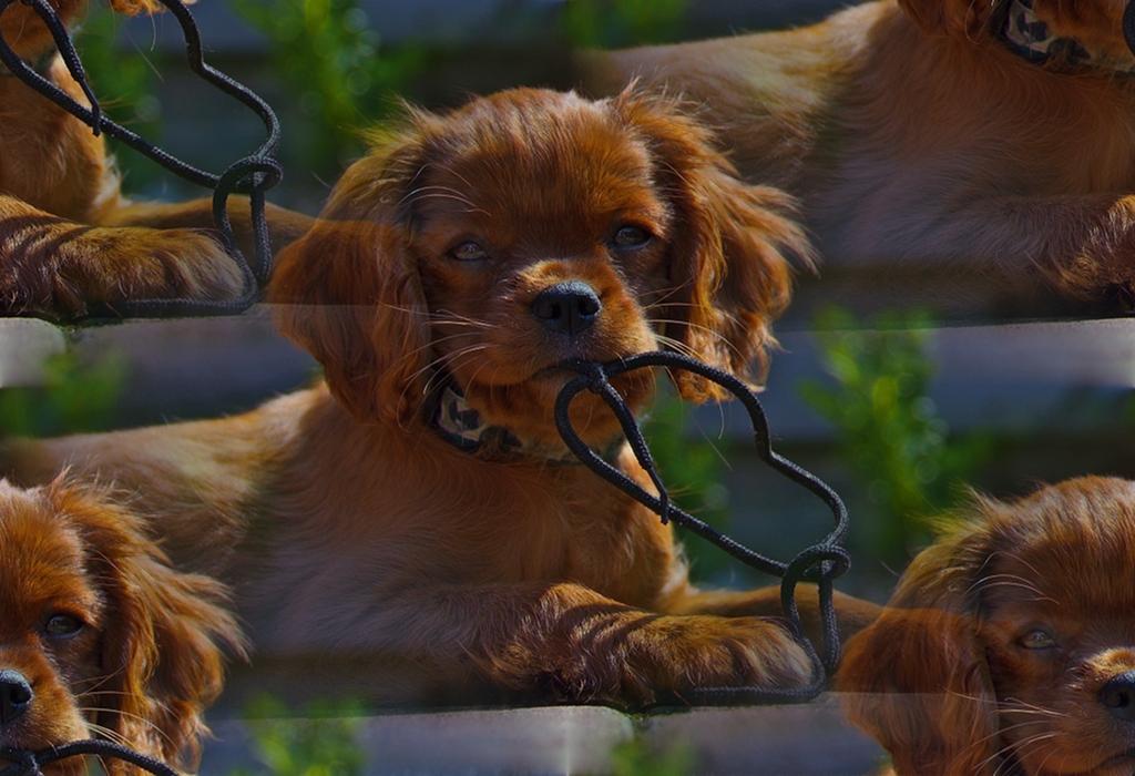 Nici Dog Photography