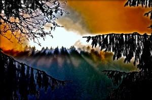 Mountain View Forest Lights PLATUX modern Art